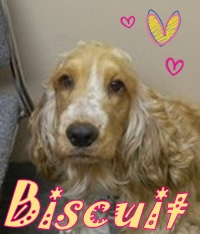 Biscuit – February 2014 Pet of The Month