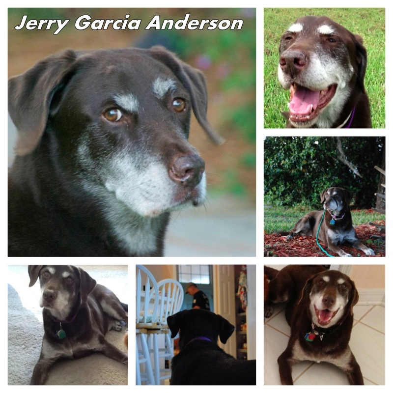 Jerry Garcia Anderson – March 2014 Pet of The Month