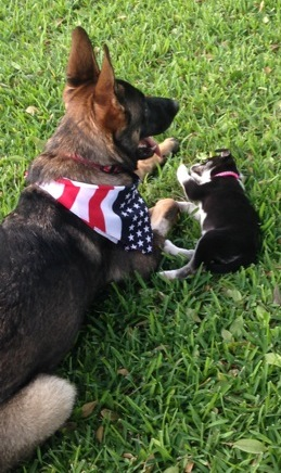 Zeus and Zoe Wright-June 2015 Pet of the Month