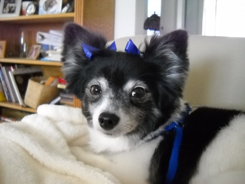 Jilly Wing- October 2015 Pet of the Month