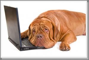 DogNostics Dog Training On Computer