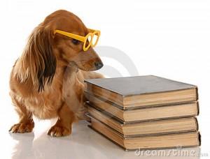 dog-education-11281575