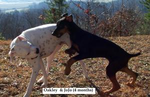 Oakley and JoJo 4 months