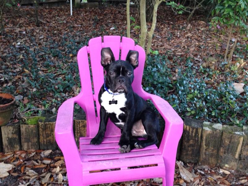 Pet of the Month-September 2016-Otis Sligar