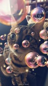 Kenzie_Bubbles