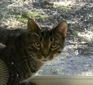 Unlike Some People Our Cat Follows >> Pet Of The Month Veterinarians In Oviedo Florida Tuscawilla